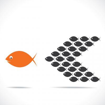 orange fish leading school of fish